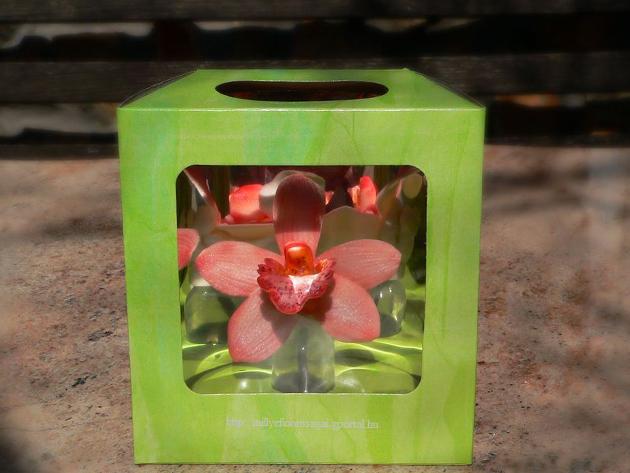 termek_dobozos_orchidea.jpg