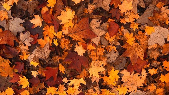 fall-foliage-111315_960_720.jpg