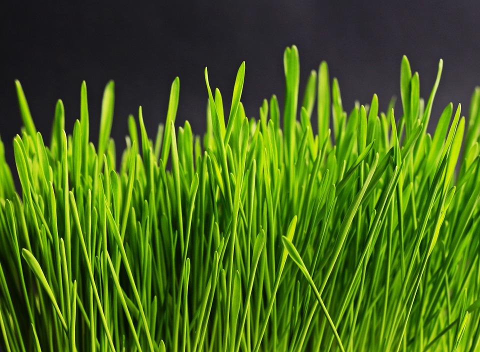 grass-534873_960_720.jpg