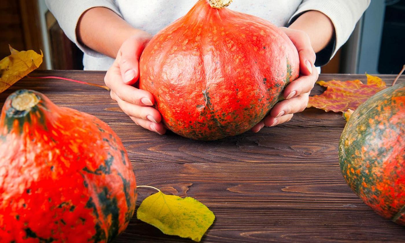 hokkaidokuerbis-pumpkin-size-by-okrasyuk-fotolia-179105473.jpg