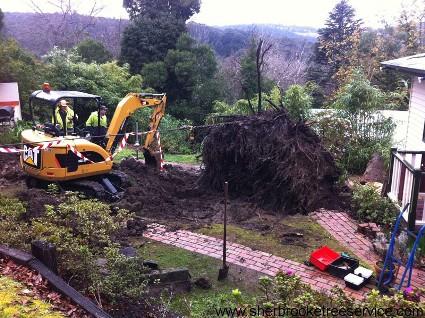 belgrave-tree-service.jpg