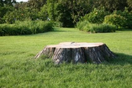 ideas-garden-tree-stump-ground-800x800.jpg