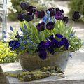 3 inspiráló tavaszi kerti tipp