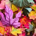 Miért színesek ősszel a fák levelei?!