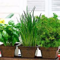 5 trendi fűszernövény