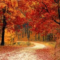 A legszebben színeződő fák