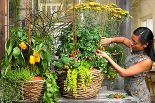 3+1 tipp az egyedi balkonért ▪️Konyhakert a balkonon ▪️Szobanövények a teraszon ▪️Méhbarát balkon Link a facebook hírfolyamban  #balkontippek #egyedibalkon #terasz #konyhakert #fűszernövény #szobanövény #balkon #kertitippek #garden #méhbarátkert #méhbarát #méhbarátbalkon #dabasikertészet #kertészet #kerttervezés #czeroczkifaiskola #czeroczkidiszfaiskola #mitültessek #szeretemakertem #kertblog #kertészblog
