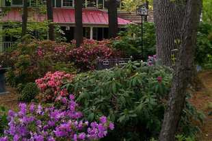 Árnyéki virágpompa