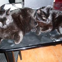 Nézegessünk az ebédhez macskákat!
