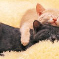 Egy cica, két cica...