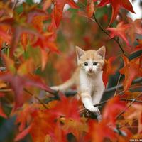 Kiscicák és nagy kalandok
