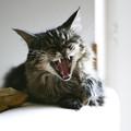 Nézegessünk az ebédhez macskákat - Vanda