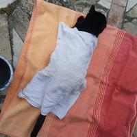 Macska - hőségcsomag: jégakku és vizes törölköző