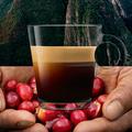 Megérkezett a Nespresso első organikus kávéja