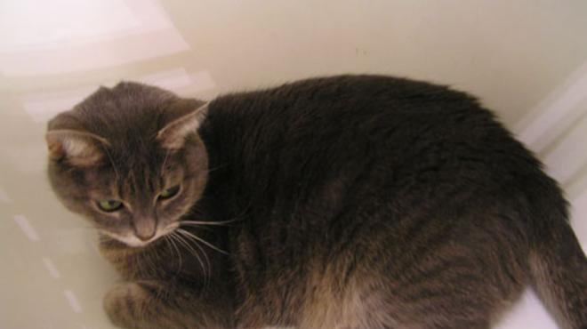 Nézegessünk az ebédhez macskákat: Kozy