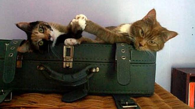 Hurrá, nyaralunk! De mi lesz a cicával?