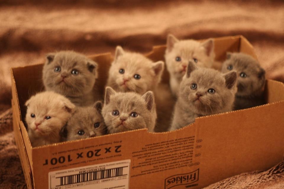 cute-little-kittens-33.jpg