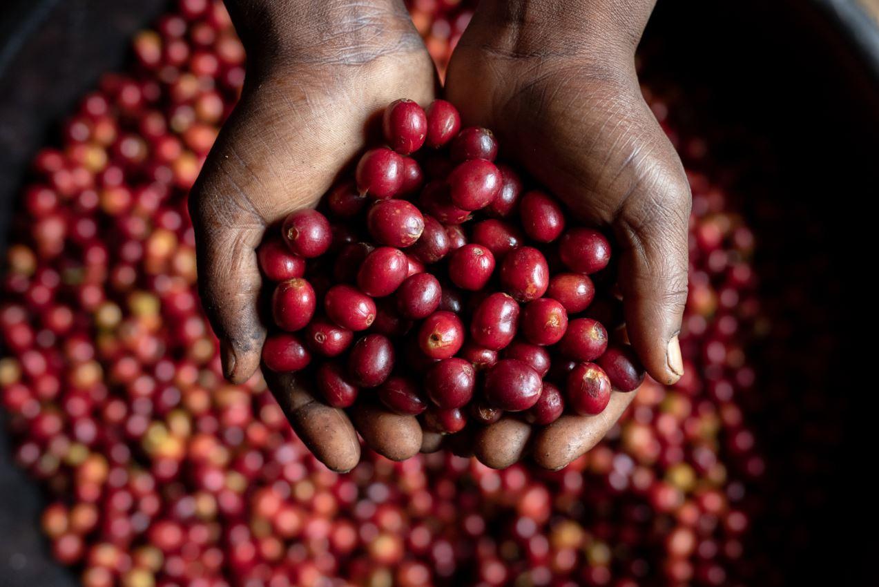 Nem tudjuk elképzelni kávé nélkül az életet, pedig húsz éven