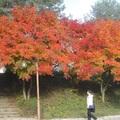 Őszi fesztivál
