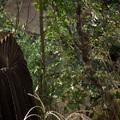 Demóna - Maleficent (2014)
