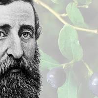 Áfonya és engedetlenség: 200 éve született Thoreau