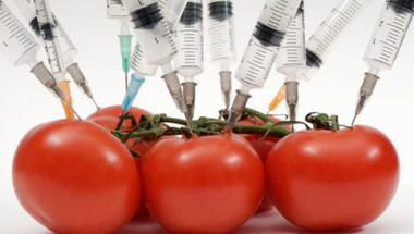 GMO-kat és betiltott rákkeltő anyagokat hoz az EU-USA szabadkereskedelmi egyezmény?