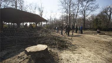 Hiába ígérgetnek, a fákat így is, úgy is kipusztítják a Ligetben