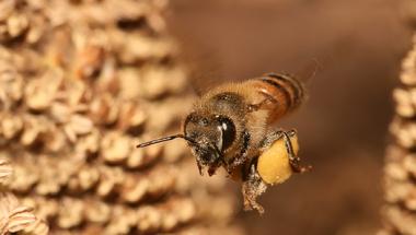 Pánikkeltés a méhgyilkos mezőgazdasági vegyszerek körül