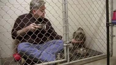 Közösen az állatok és az emberek méltóságáért – A bántalmazás minden formája ellen tiltakozni kell
