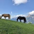 H2GO! - természeti vízirevü az Alpokban