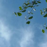 Napi bölcsesség: A Rendről és a Gondviselésről