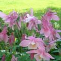 Az álmodozás kertje – rózsaszín 4.