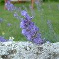 A belső hang kertje 5. - lila