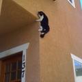 A kvantummechanika hazugságai - avagy Schrödinger macskája félhülye - azaz Eintstein, bazmeg, a cica fel van mászva a falra
