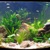 Az akvárium