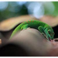 Fotók kígyókról és viperákról