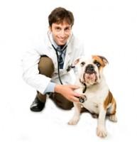 kutyadoki-e1317122247101.jpg