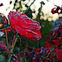 Még egy kis ősz