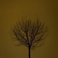 Világvége fa