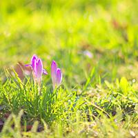 Most már bizonyos, hogy tavasz van
