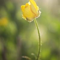 Virágos 3