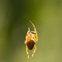 Pókos 4 : a fényhálós és a sötétben bujkáló