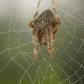 A pók ősze