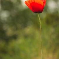 Virágos 4
