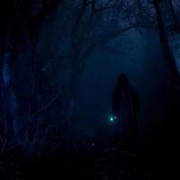 Sötét erdőben II
