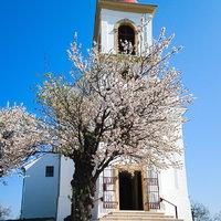 Tavasz a Tettyén, és az év fája