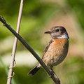 Madaras 29 - Sárrét madarai