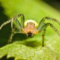 Pókos 5 - tökös pók
