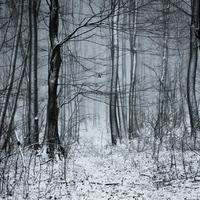 Havas erdős