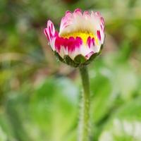 Virágos 2